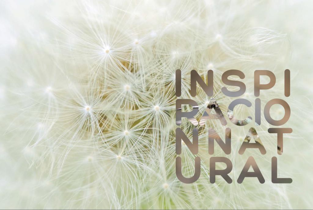 Biomímesis: inspiración natural