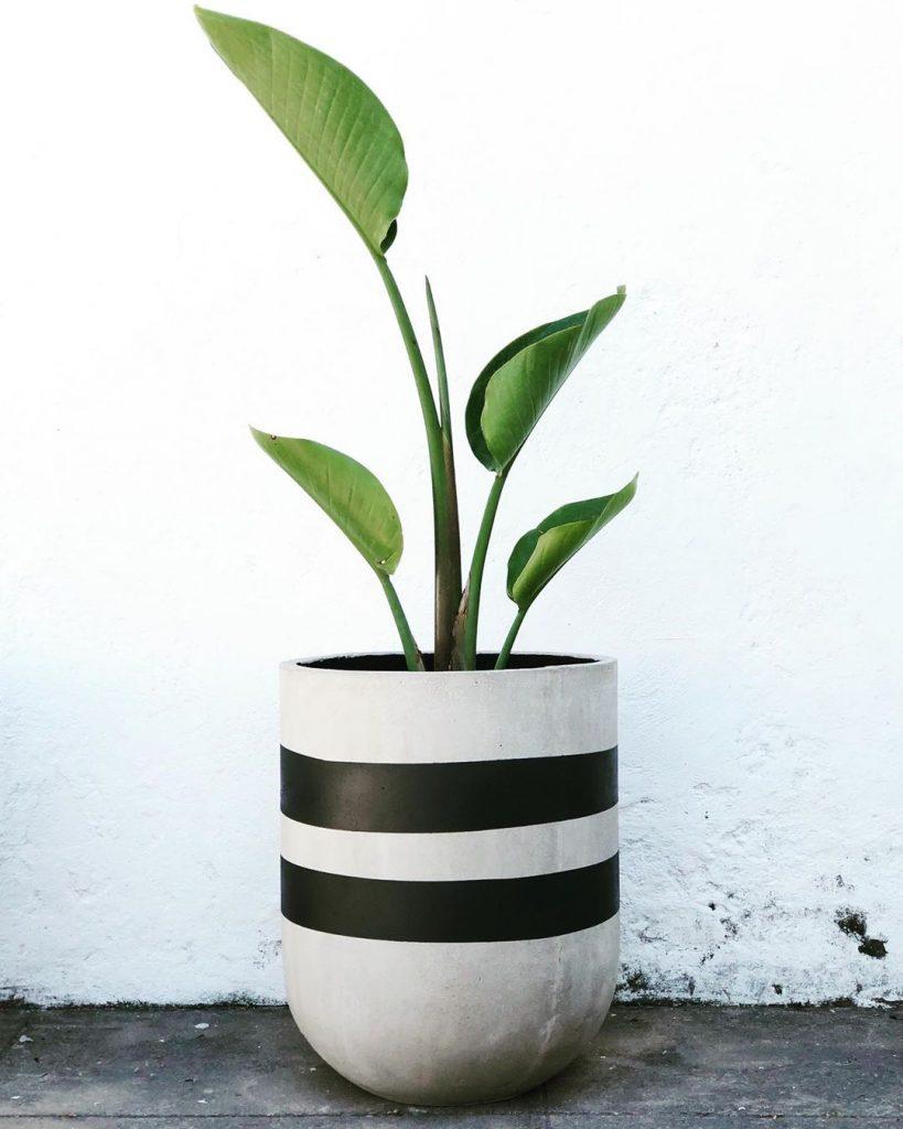urban pots