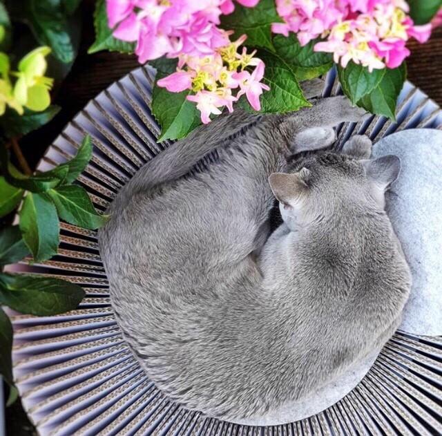 Katris: una cama para mascotas hecha en Silicon Valley