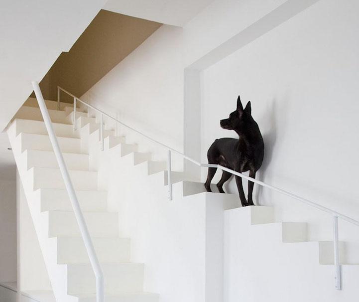 Escaleras para mascotas. Arquitectura que piensa en los animales