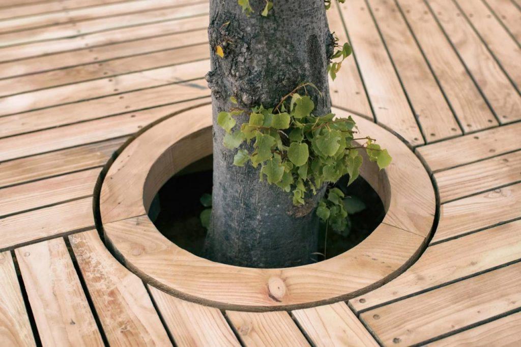En una crece un árbol de tilo.