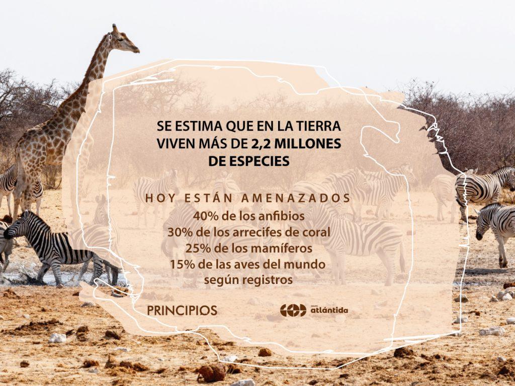 Cuidado Animal es la octava causa de impacto social que aborda la campaña PRINCIPIOS de Grupo Atlántida.