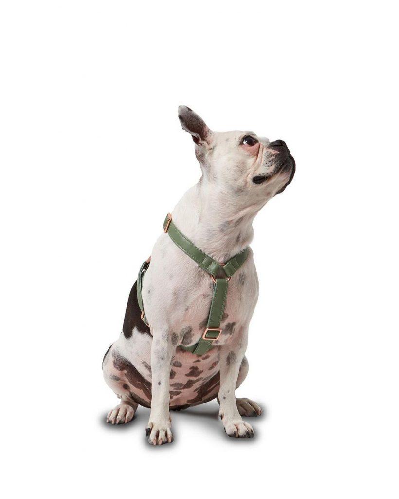 """""""Un mundo sin límites debe extenderse a nuestras mascotas"""", expresan en Koston."""