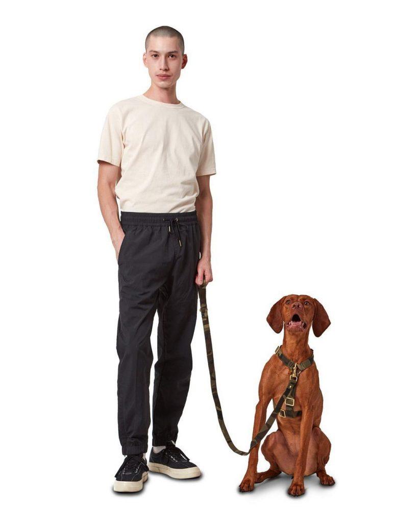 Koston propone accesorios para perros simples, funcionales y con estilo.